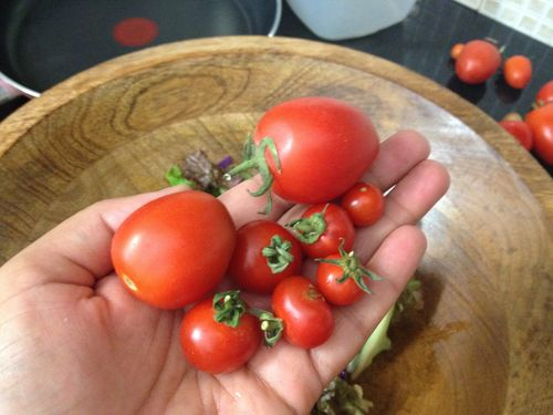Tomatoes_galore
